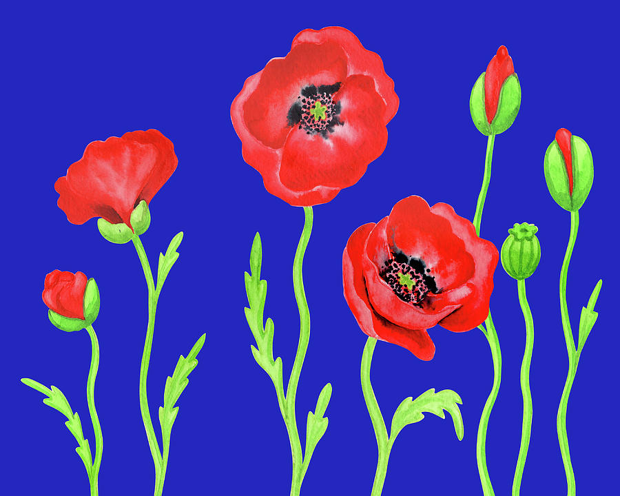 Red Poppies Blue Sky Watercolor Botanical Flowers Painting