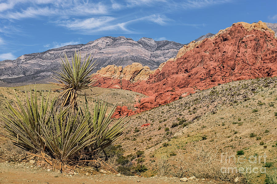 Red Rock Canyon Nevada Photograph