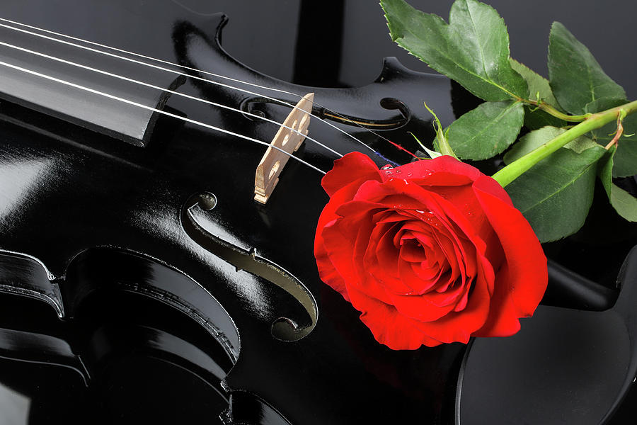 Red Rose And Black Violin by Garry Gay