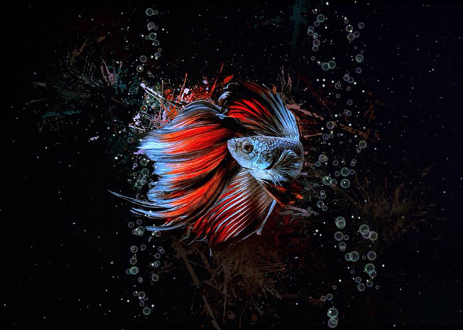 Red Rose Fin Betta Fish Aquatic Portrait Digital Art