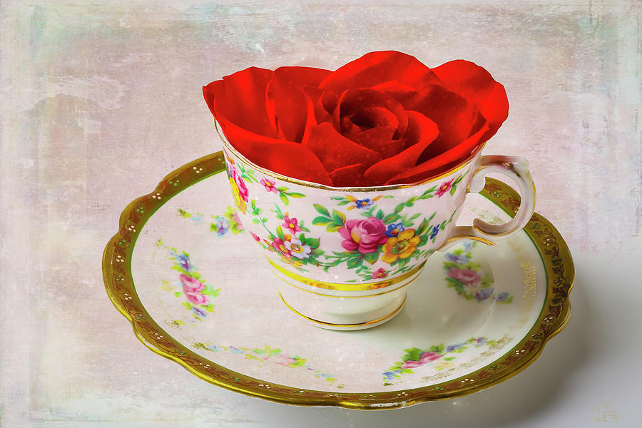 Red Rose In Tea Cup by Garry Gay