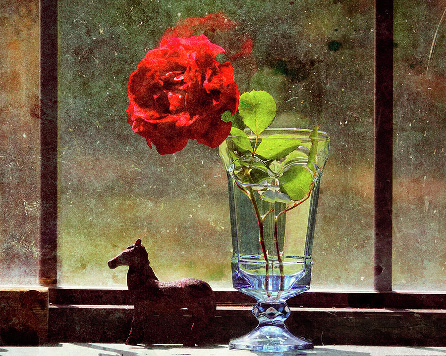 Red Rose In The Window-isolation Photograph
