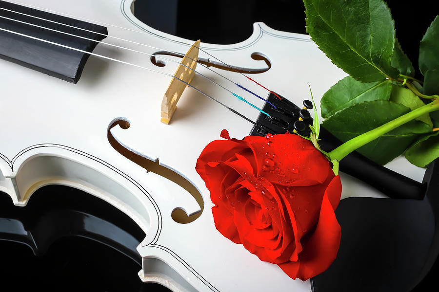 Red Rose Resting On White Violin by Garry Gay