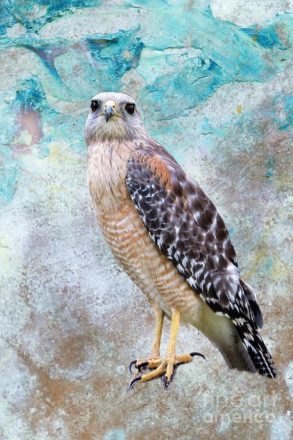 Red Shouldered Hawk Art Photograph