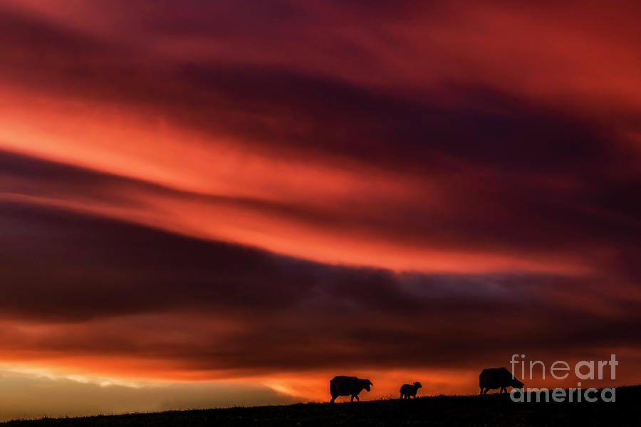 Red Sky and Lowering by Thomas R Fletcher