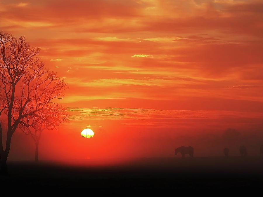 Red Sky Sunrise 2 Photograph