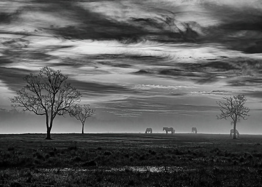 Red Sky Sunrise Black And White Photograph