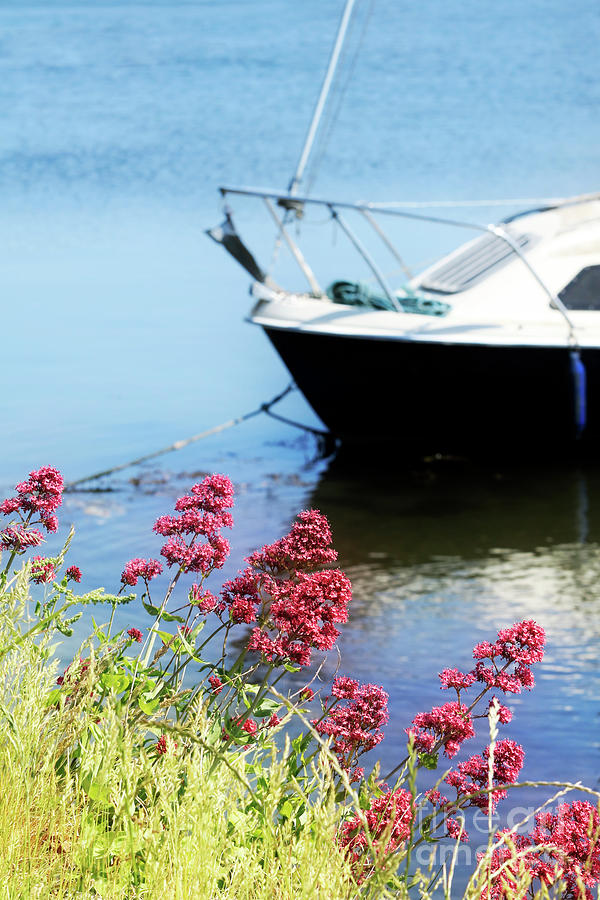 Red Valerian By The Creek Photograph