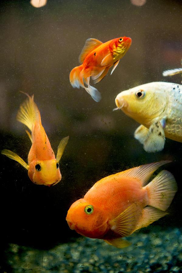 Redfish and Aquarium Photograph by Feifei Cui-Paoluzzo