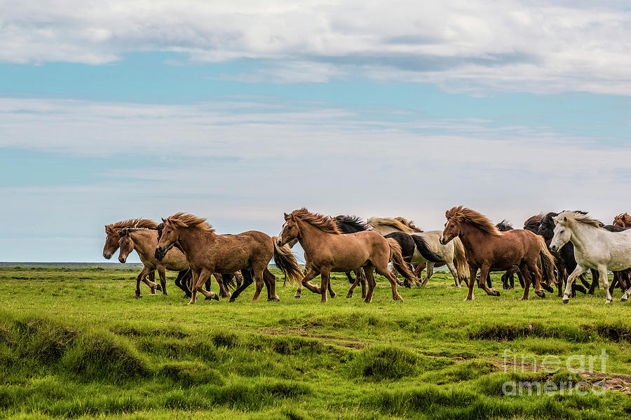 Reds Of Iceland Photograph