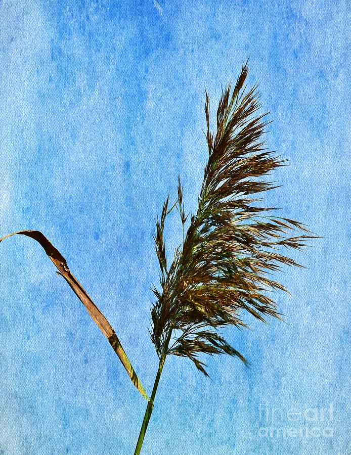 Reed 7 Photograph