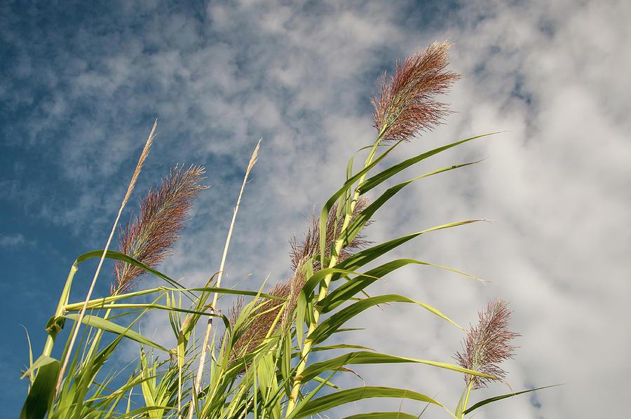 Grass Reeds Photograph - Reeds by Rob Hemphill
