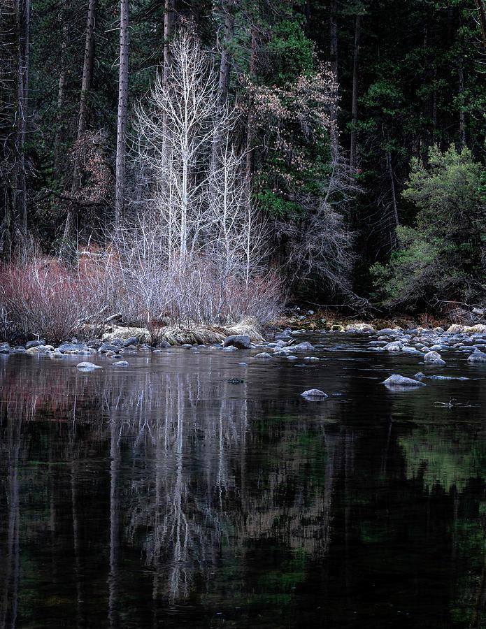 Tree Photograph - Refleciton by Paul Malen