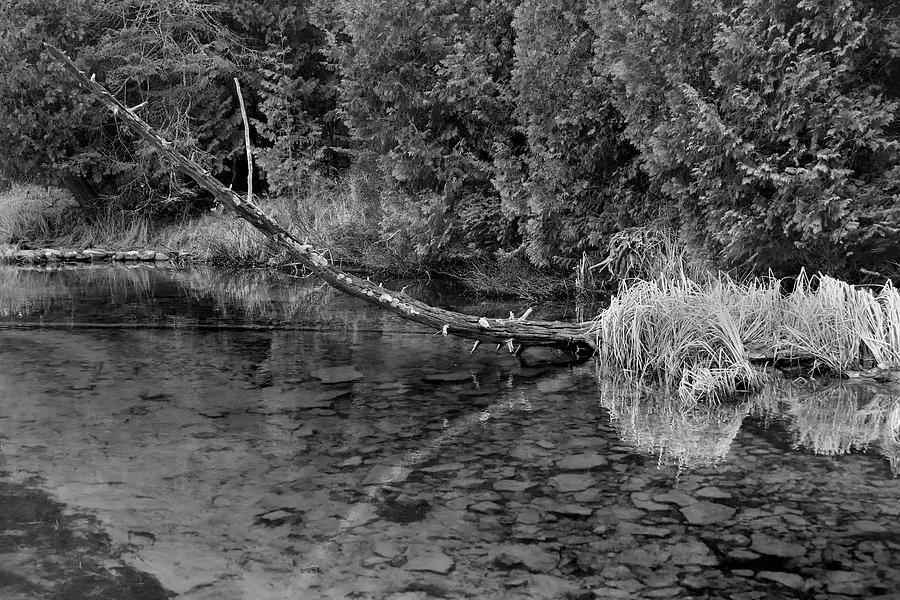 Reflection At Reiboldt Creek Photograph