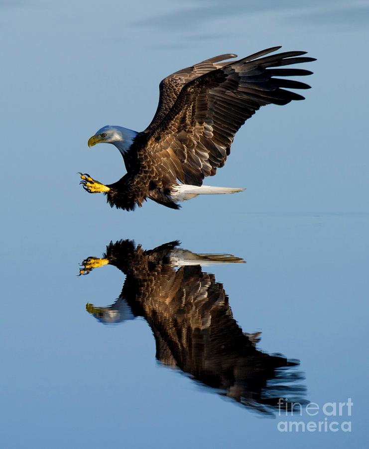 Reflection by Michael Graham