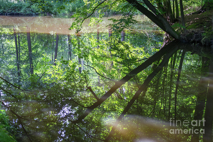 Reflection Of Trees In Calm Water Photograph