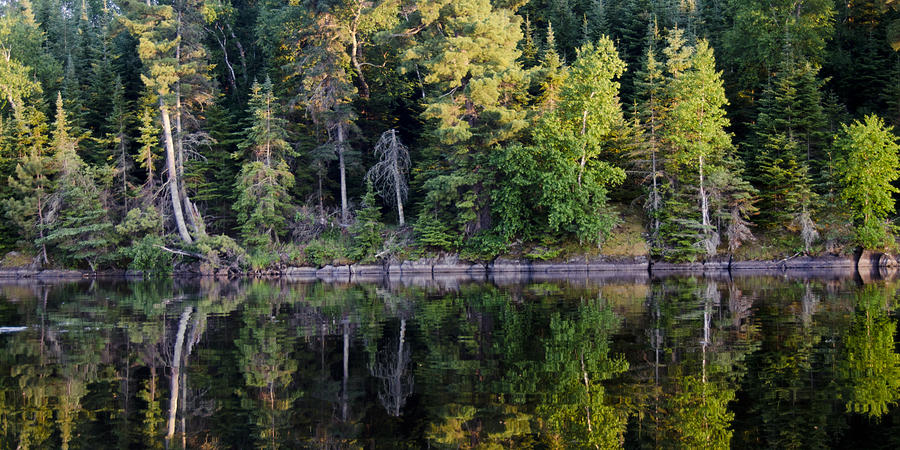 Reflection of trees in water Photograph by Fotosearch