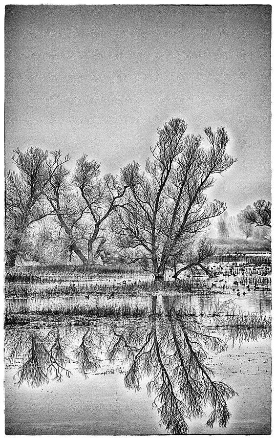Reflections At Gray Lodge Photograph