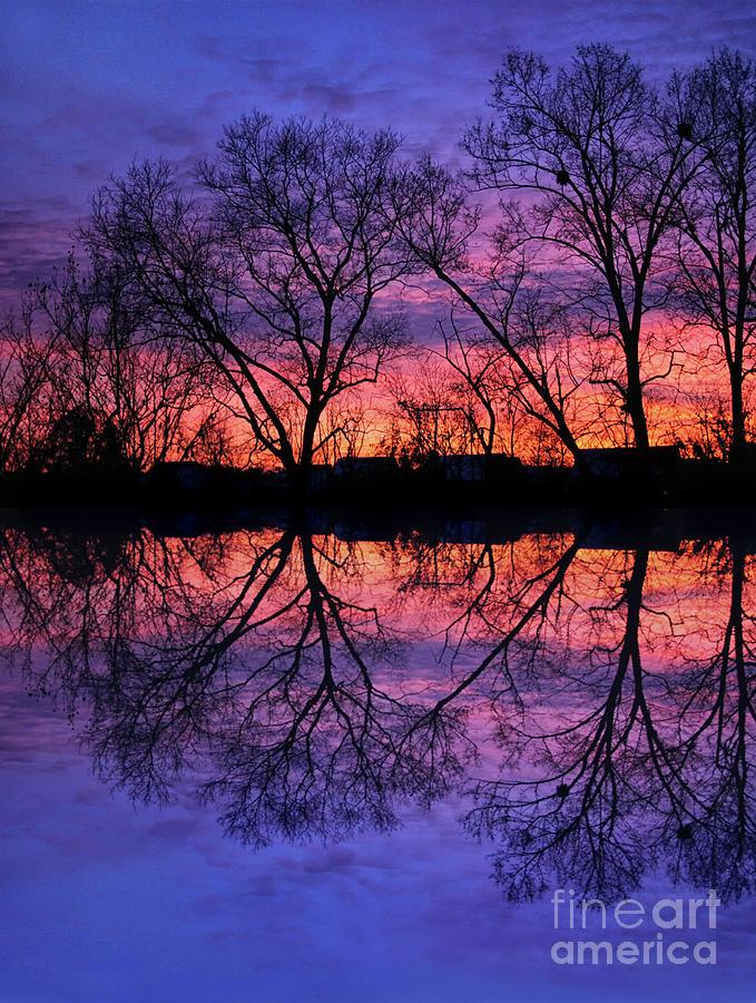 Trees Photograph - Reflections Of A Winter Sunset by Karen Adams