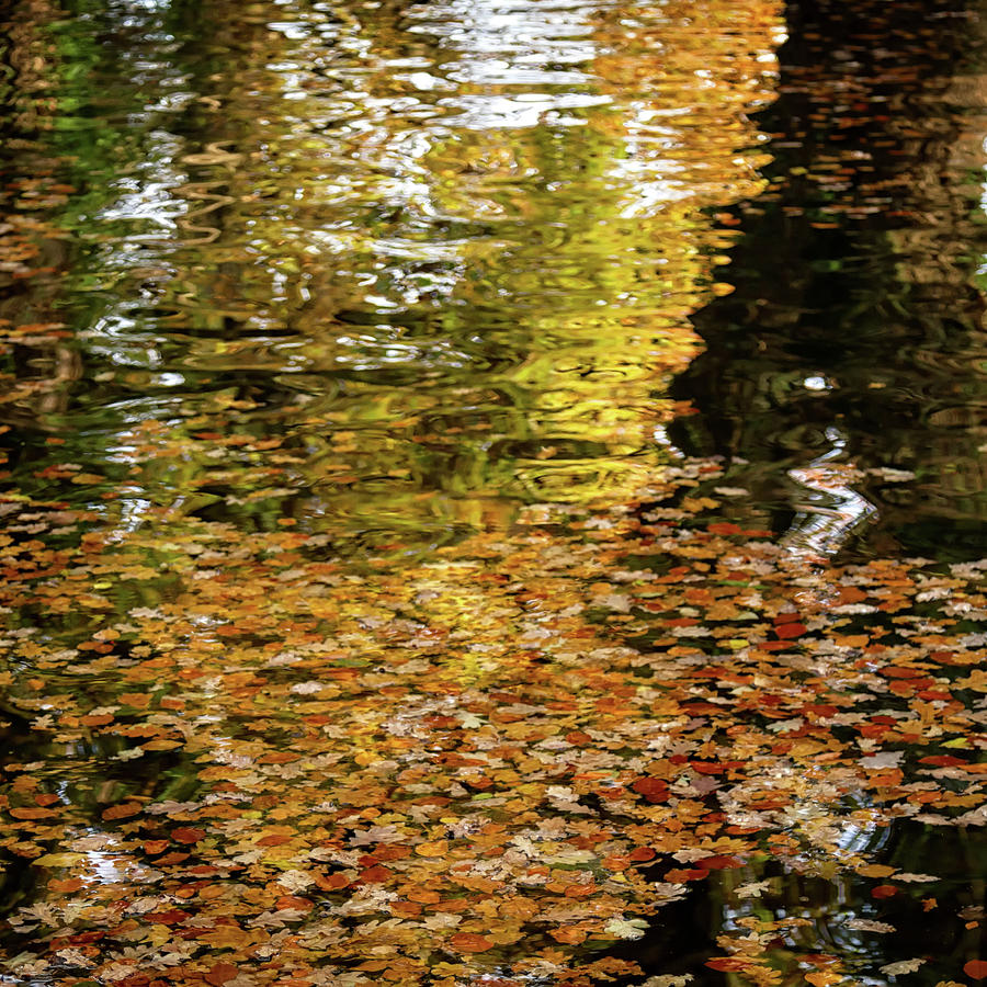 Reflections of Autumn  by Shirley Mitchell