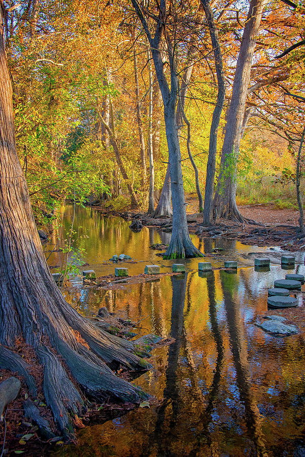 Reflections Of Gold Along Cibolo Creek by Lynn Bauer