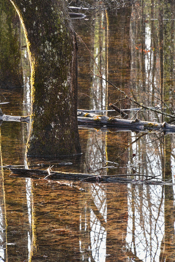 Reflections On Standing Water by Phil Perkins