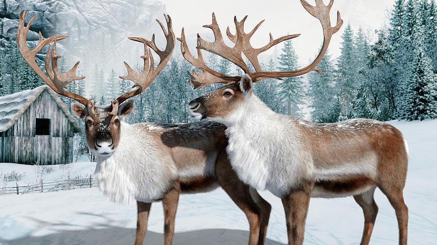 Reindeers Digital Art