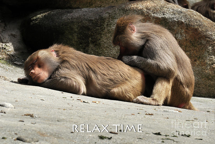 Relax Time Photograph