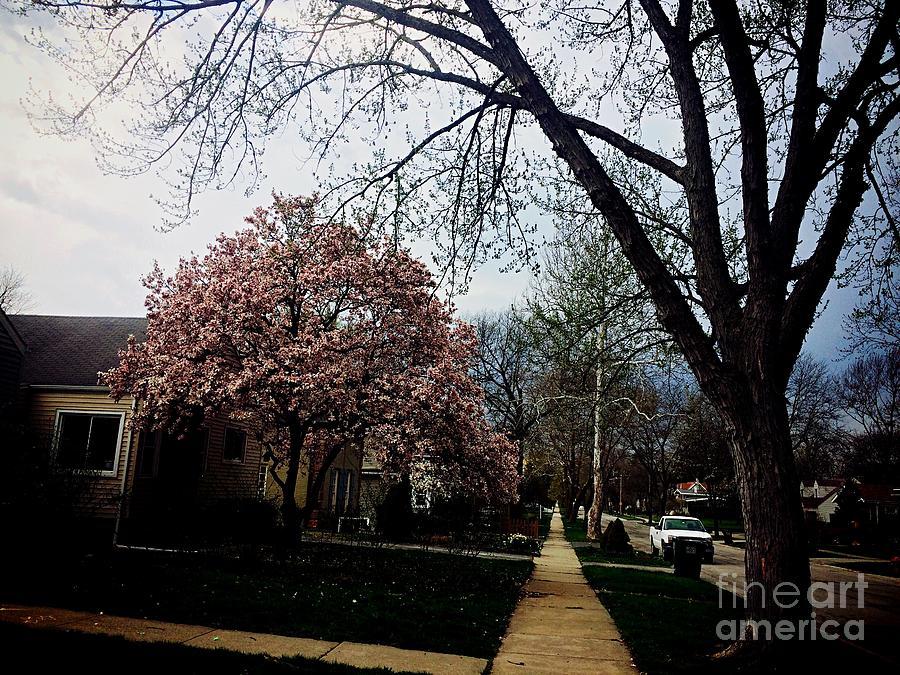 Magnolia Tree Photograph - Remember You Are Precious by Frank J Casella