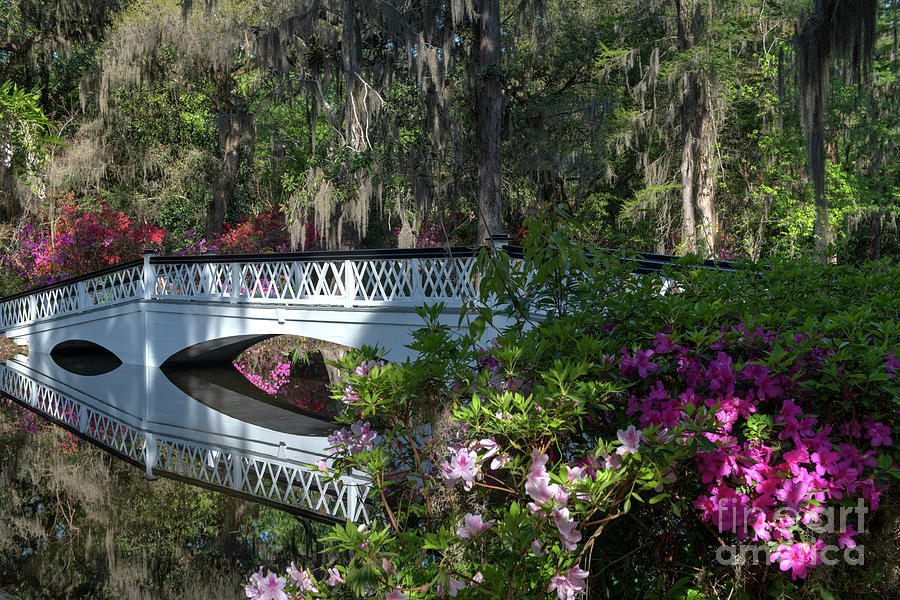 Reminiscent Of The Old South - Magnolia Plantation Photograph