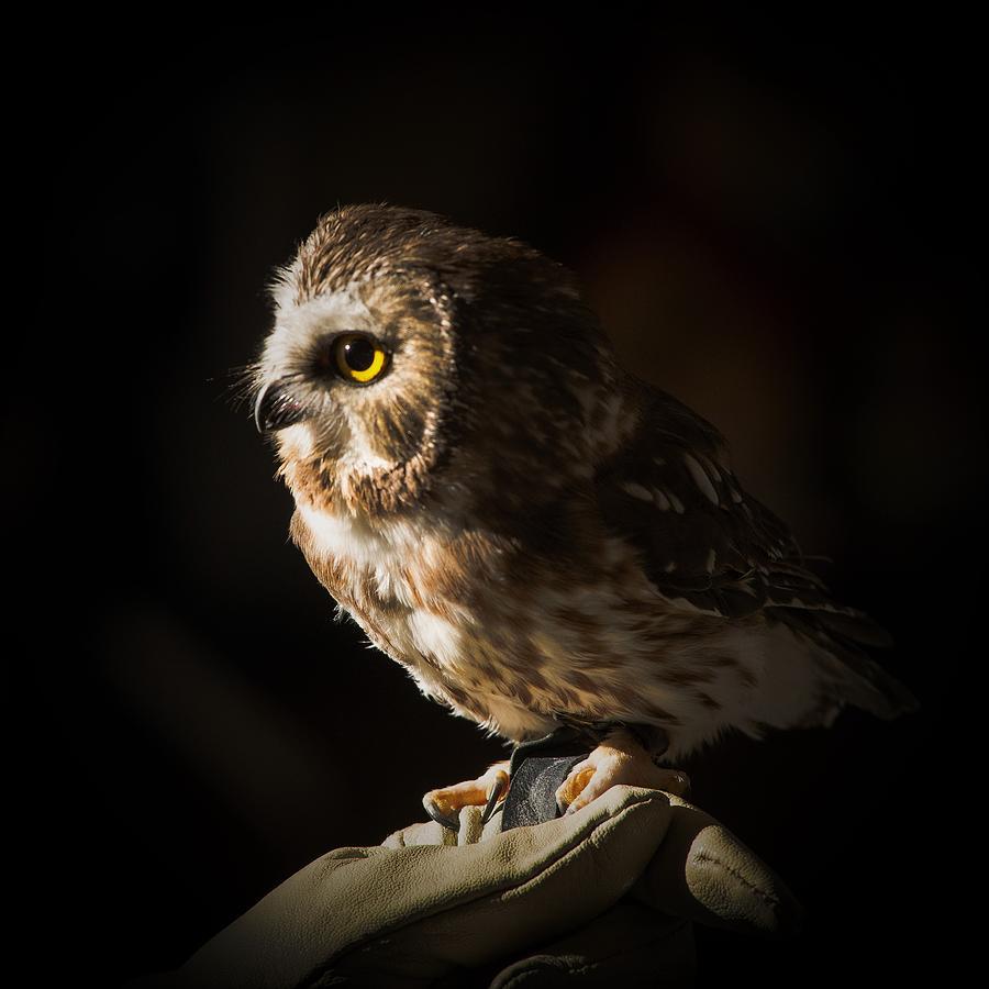 Rescue Bird by Jeffrey Jensen