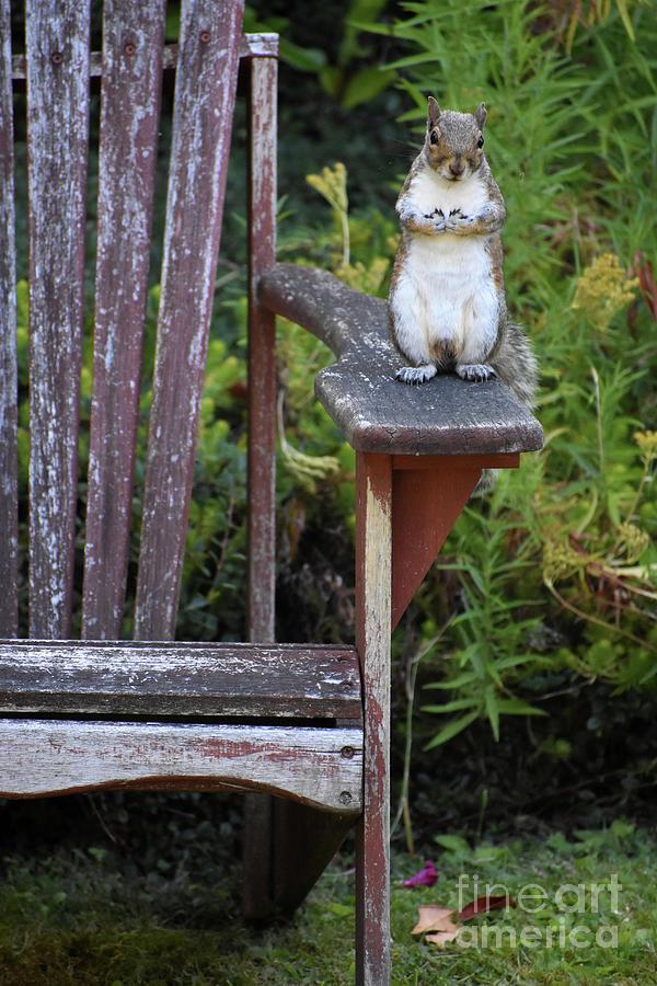 Squirrel Photograph - Respectful Squirrel Pose by Rose De Dan