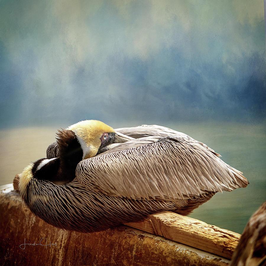 Pelican Digital Art - Resting Pelican by Linda Lee Hall
