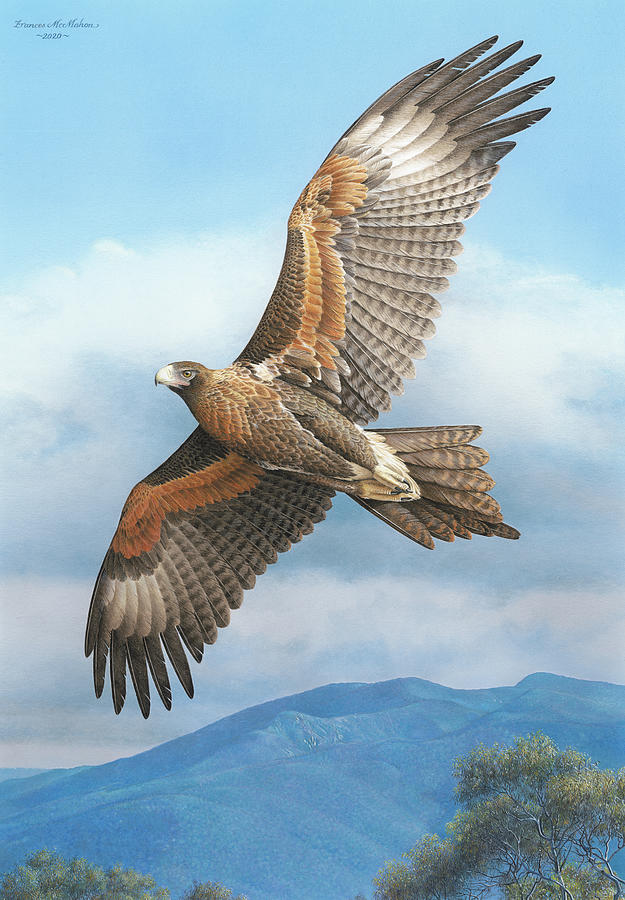 Eagle Painting - Rex Avium-Wedge tailed Eagle by Frances McMahon