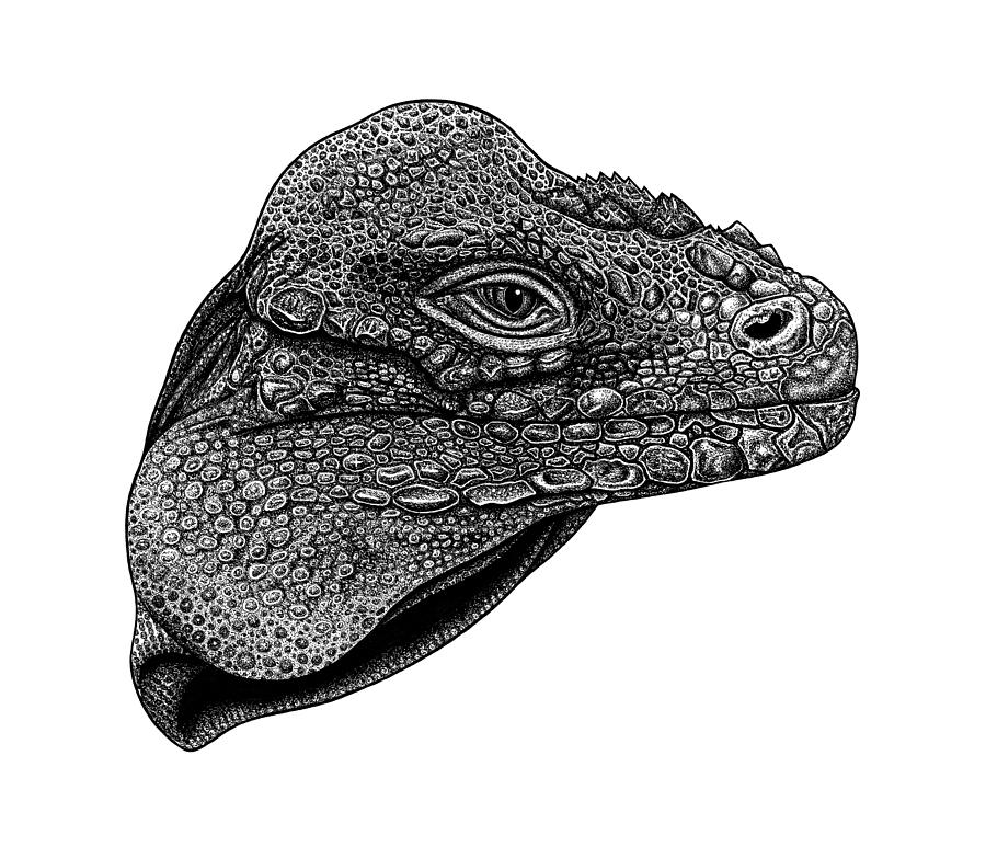 Rhinoceros iguana ink illustration by Loren Dowding