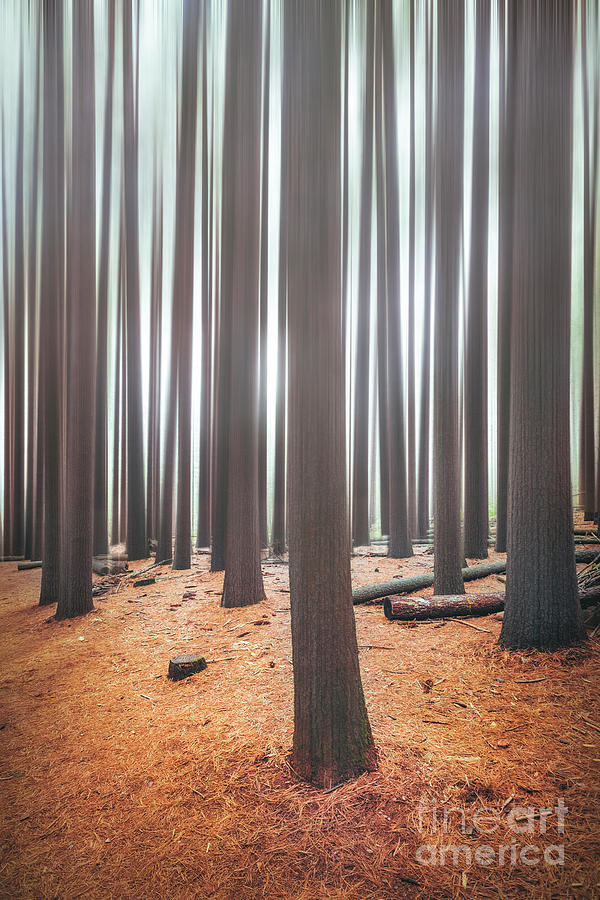 Rhythm Of The Trees by Evelina Kremsdorf