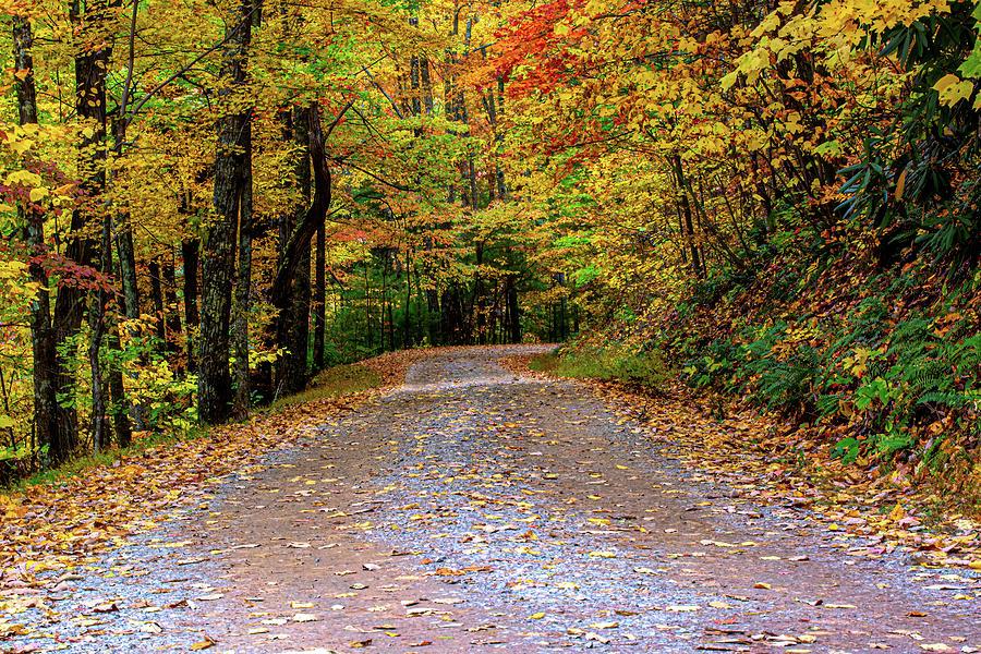 Rich Mountain Road Autumn by Douglas Wielfaert