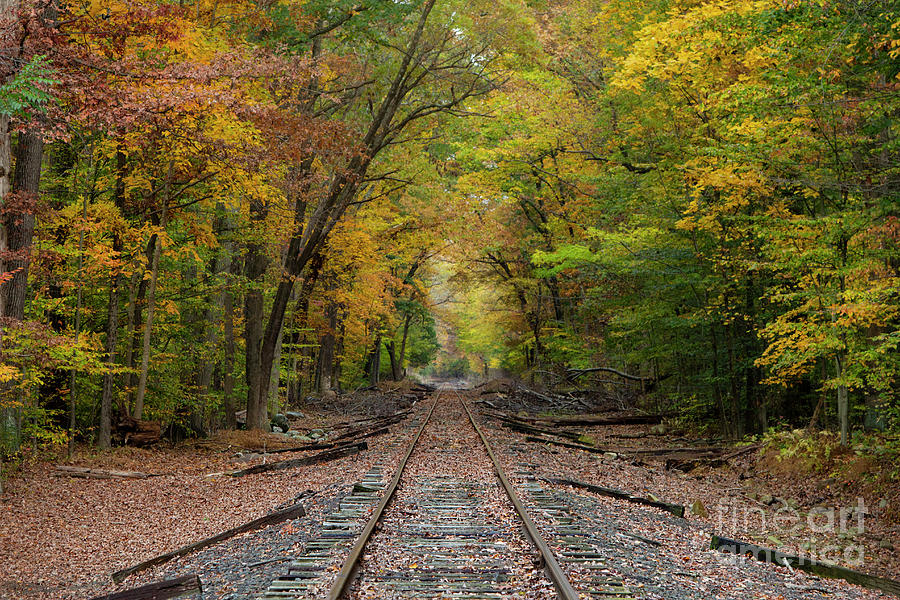 Ride into the Colors of Fall by Yelena Rozov