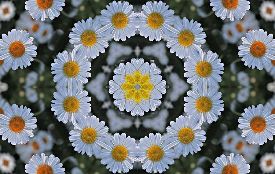 Ring Around The Daisy Digital Art