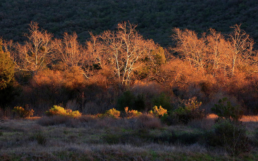 Riparian Forest at Sunset by Robin Street-Morris