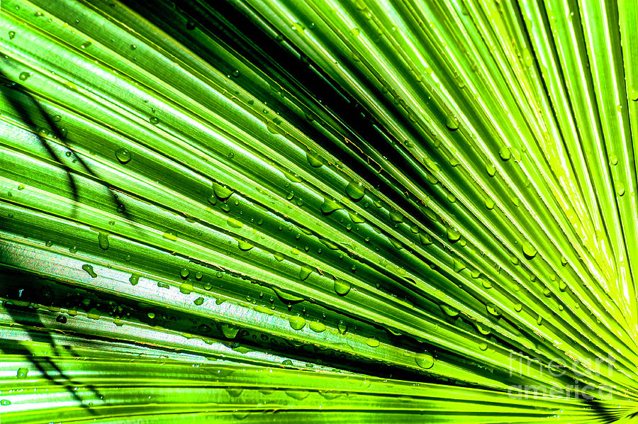 Leaf Photograph - Ripples Of Green With Drpplets by Frances Ann Hattier