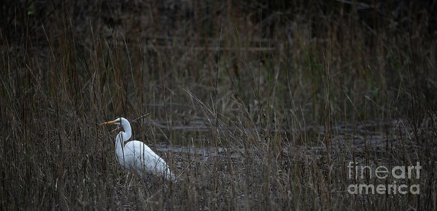 Rising Tide Winter Salt Marsh Photograph