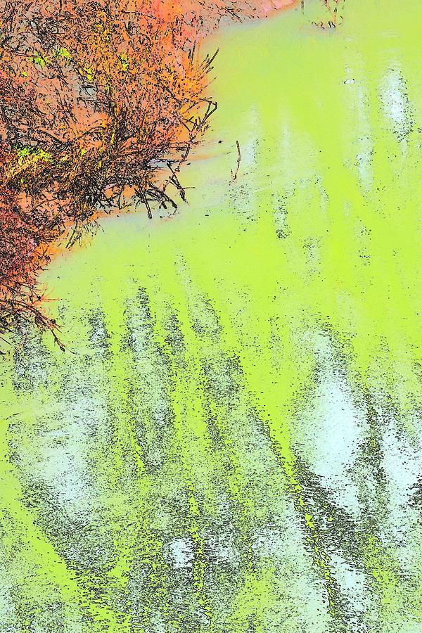 River Bank Trees Reflections Photograph