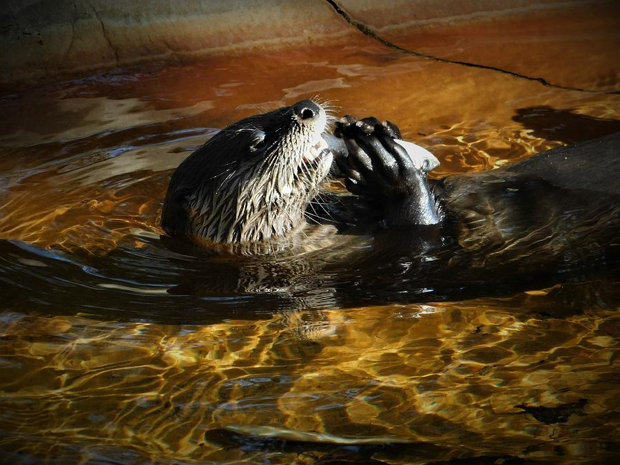 River Otter by Carl Moore