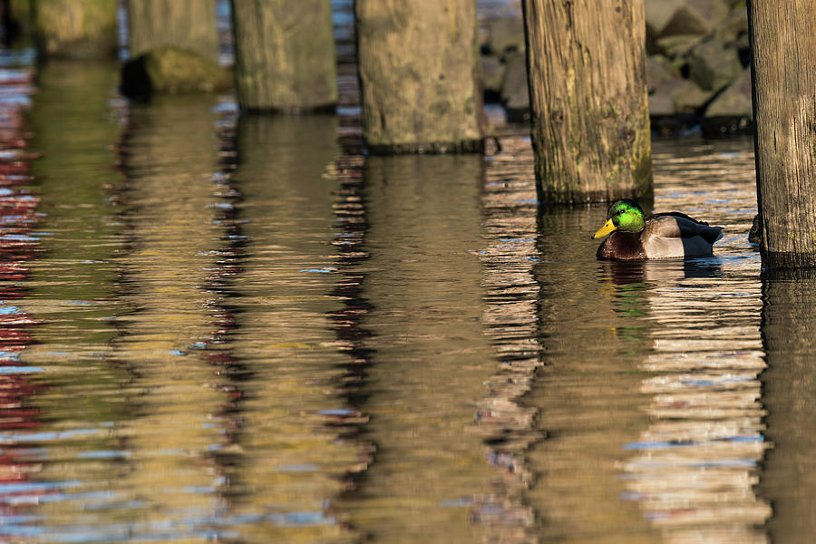 Riverwalk Reflection by Robert Potts