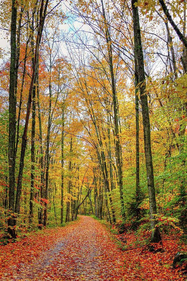 Road Along Cary Lake by David Patterson