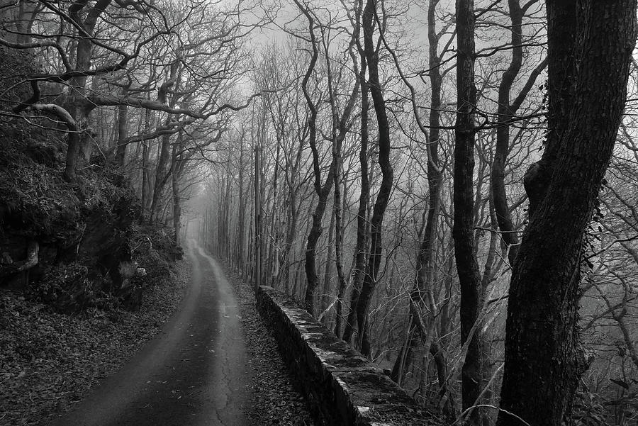 Road Cutting Through The Woods Photograph