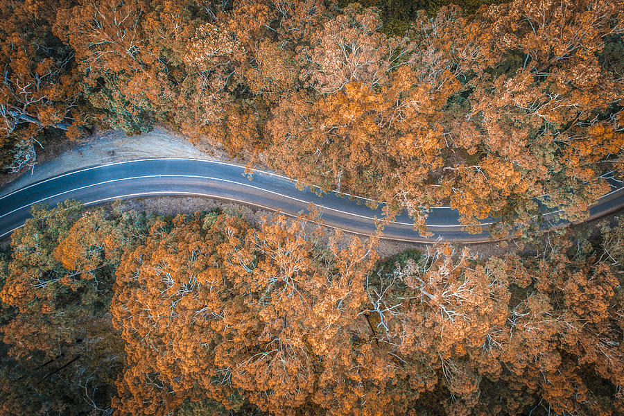 Road in the middle of forest in Australia Photograph by AzmanL