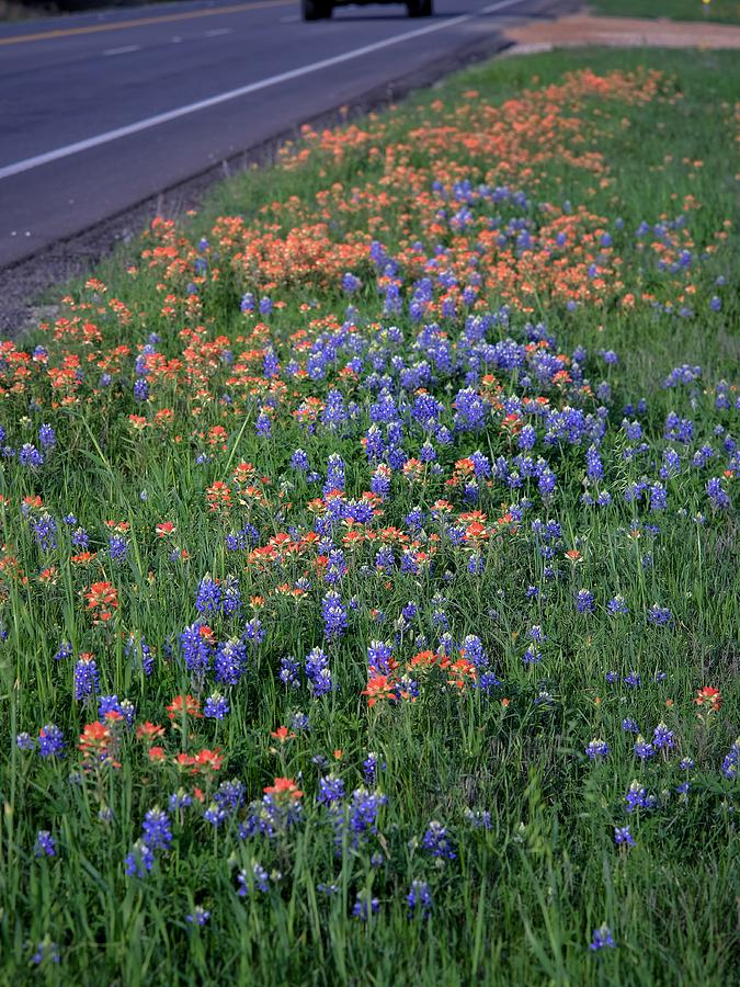 Roadside Wildflowers Photograph
