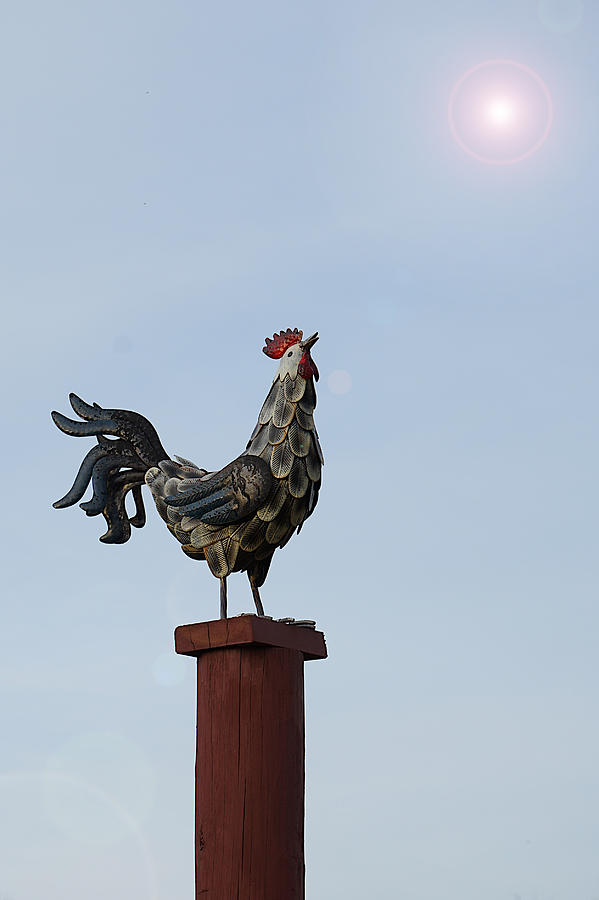Robot Rooster Call by Richard Reeve